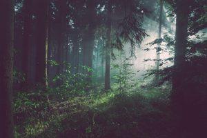 5 tips til at leve et mere bæredygtigt liv